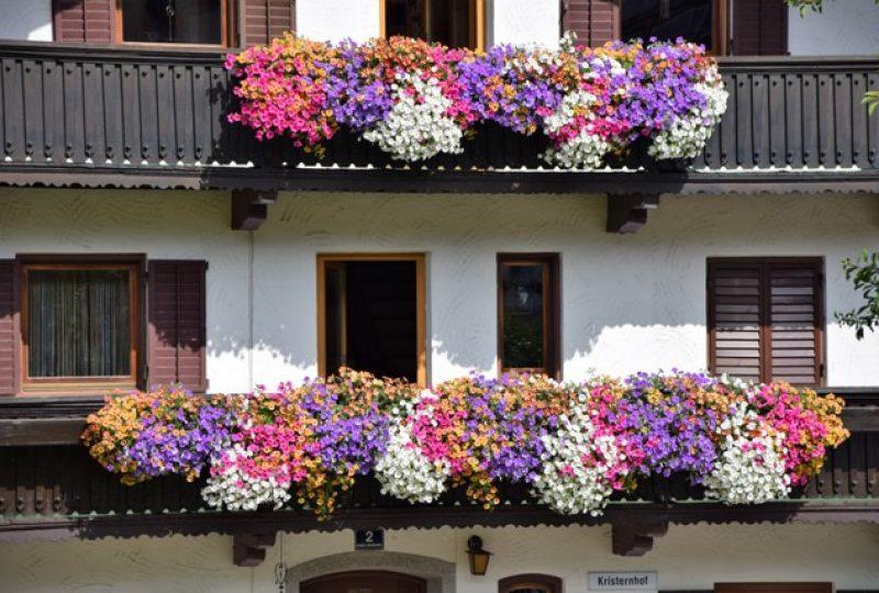 G Blumen_2017_GrattKristern_2