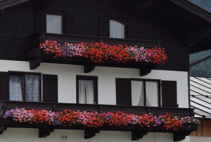 G Blumen_2017_UnterrainerRosa_2